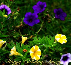 Happy Birthday Nancy (Lynn English) Tags: nancy flickr friend tinytreasureinflora