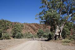 Bonney Sandstone Formation (oz_lightning) Tags: 4wd australia brachinagorge canon6d canonef1635mmf4lis flindersranges flindersrangesnp people sa cars geology landscape nature sedimentary flindersrangesnationalpark southaustralia aus