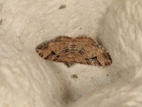 Epyaxa subidaria
