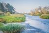 20171014-DSC_0659 (M van Oosterhout) Tags: amsterdamse waterleiding duine natuur nature flora fauna landschap landscape dutch holland amsterdam nederland netherlands animals