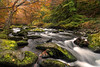 Autumn Run (Andy Davey Photography) Tags: autumn river leaves rocks moss eastlyn northdevon d850 nikon watersmeet water