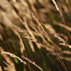 Autumn backlight (Ernst_P.) Tags: aut hochleithenkopf österreich reithbeiseefeld tirol pflanze gras gegenlicht samyang walimex 135mm f20