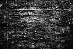 (tohlfer) Tags: kansascity nelsonatkins anselmkiefer canon canon5dmarkii art expressionism