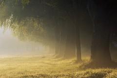 0614 Dew, Mist & Morning Sun (Hrvoje Simich - gaZZda) Tags: sun light fog misty field landscape outdoors noperson dew morning sunrise dawn josava croatia europe nikon nikond750 sigma150500563 gazzda hrvojesimich