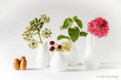 057/117 Still Life (Jamarem) Tags: autumn acorns ivy berries vases four white hih highkey stilllife tabletop octoberchallenge 2017