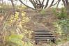 (Justin van Damme) Tags: river osborne south winnipeg fall green yellow autumn trees bare wood ladder palette