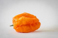 Bhut Orange Copenhagen (stankar) Tags: bhut orange copenhagen chilli pepper boc