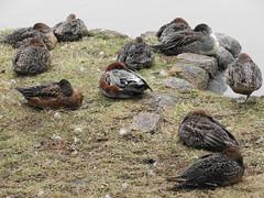 渡り鳥(みんな寝てる) Sleeping everyone