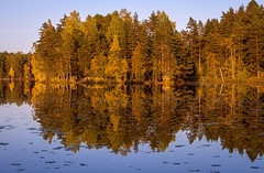 Holma-Saarijärvi (tinamar789) Tags: forest autumn golden light island reflection tree trees pine birch aspen lake water colorful color landscape yellow nuuksio national park espoo finland