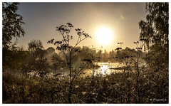 Happy halloween (Pascale_seg) Tags: landscape paysage automne autumn mist misty morning matin aube aurore ombres moselle lorraine france tree flower sun leverdesoleil rivière river riverscape shadow hank thank you halloween toiles araignée ambiance