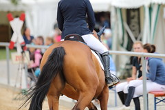 _MG_6023 (dreiwn) Tags: ridingarena reitturnier reiten reitplatz reitverein reitsport ridingclub equestrian showjumping springreiten horse horseback horseriding horseshow pferdesport pferd pony pferde tamronsp70200f28divcusd