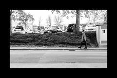 *** LOOK UP *** (*** Joe Wild ***) Tags: street streetart streetphoto streetpic car cars tree bw bnw blackandwhite black white schwarz weiss schwarzweiss bwphotography fe 50mm f18 sony ilce7m2 50mmwayoflife ishoot50mm ilike50mm kook look up tag people man mann walking walk
