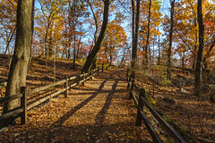 NYBG (fmccarthy1) Tags: autumn bronx fall landscape nybg newyorkbotanicalgarden november shadows botanicalgardens foliage light outdoorphotography