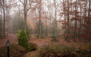 Early Morning Fog  1Z9A9521