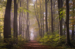 Spinney - Basinsgtoke (Christopher Pope Photography) Tags: beechtrees autumn christopherpopephotography basingstoke chrispope woods mist spinney fog beeches wwwchristopherpopephotographycom woodlands