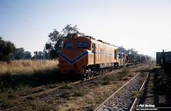 2609 XB1017 Busselton Stockyards 16 December 1981 (RailWA) Tags: railwa philmelling westrail 1981 xb1017 busselton stockyards