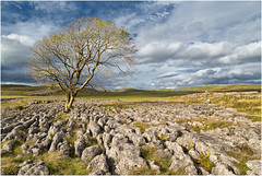 The Lone Tree (Antony Ward) Tags: malam limestonepavement