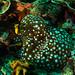 nemos in bubble anemones