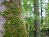 Moss on tree (✦ Erdinc Ulas Photography ✦) Tags: lenstagger amsterdam netherlands bos amsterdamse nederland dutch groen green moss mos boom wood tak autumn bokeh konica hexanon