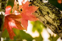 fall start