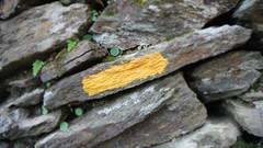 Human Trace (Astral Eye) Tags: macro nature pierre stone rocher mur caillou human humain artificiel extérieur foret plante terre végétal végétation naturel noir gris