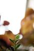 Hope (aidin36) Tags: peperomia radiatorplant fall growing plant minimal bokeh بوکه مینیمال گیاه رشد پاییز پائیز گلقاشقی blur dof depthoffield