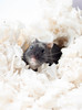 (Earth Rise) Tags: hamster hamsters dwarf flowers animal animals