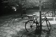 autumn light@Volksgarten, Düsseldorf (Amselchen) Tags: bicycle mono monochrome bnw blackandwhite lightandshadow light shadow season autumn bokeh blur dof depthoffield fujifilm fujifilmxseries fujinon xt2 fujifilmxt2 xf35mmf14r