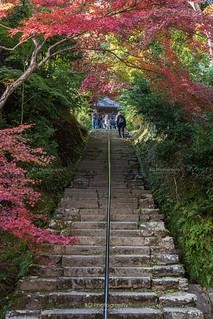 Maples :: Kyoto (京都), Japan