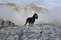 Nasco en Italie (bulbocode909) Tags: nature montagnes brume rochers italie coldugrandstbernard valais suisse chiens