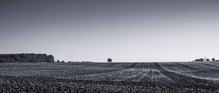 the tree and the ploughed field
