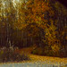The Path Home (Rebeak) Tags: trees alaska rebeak golden landscape leaves yellows browns path