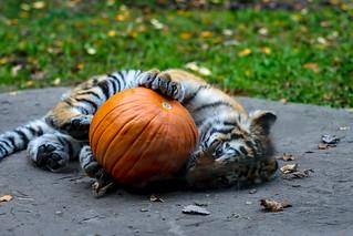 Vera and her pumpkin