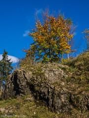 Harz Wanderungen 102017 8 (U. Heinze) Tags: herbst harz olympus nature