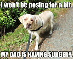 There won't be any new Gracie photos for a while. (walneylad) Tags: gracie dog canine pet puppy cute lab labrador labradorretriever october fall autumn meme noposing