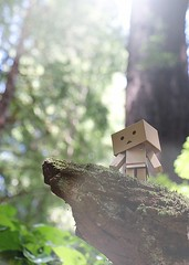 *** (erichbumgarner) Tags: redwood redwoods danboard danbo forest trees log box sun glare green brown surreal