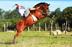Odilo Gonçalves (Eduardo Amorim) Tags: gaúcho gaúchos gaucho gauchos cavalos caballos horses chevaux cavalli pferde caballo horse cheval cavallo pferd crioulo criollo crioulos criollos cavalocrioulo cavaloscrioulos caballocriollo caballoscriollos pampa campanha fronteira bagé riograndedosul brésil brasil sudamérica südamerika suramérica américadosul southamerica amériquedusud americameridionale américadelsur americadelsud cavalo 馬 حصان 马 лошадь ঘোড়া 말 סוס ม้า häst hest hevonen άλογο brazil eduardoamorim gineteada jineteada
