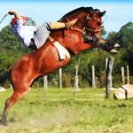 Odilo Gonçalves thumbnail