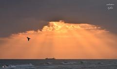 MATTINO ! (Salvatore Lo Faro) Tags: alba mare natura nature nuvole rosso raggi uccello gabbiano nave lidodelsole rodi puglia gargano italia italy salvatore lofaro nikon 7200