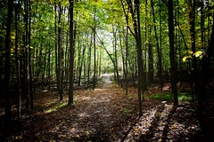 Path 1 (RichKD) Tags: fall autumn tree path nature light dark shadow canon eos 5d michigan green