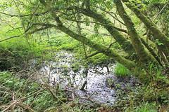 IMG_3155 (avsfan1321) Tags: connemaranationalpark connemara nationalpark ireland countygalway green lush landscape plants moss