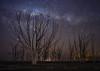 Árbol de luz (karinavera) Tags: longexposure night photography ilcea7m2 branch tree milkyway deadtree sky solitary stars