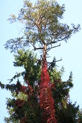 dressed up tree (bia93snow) Tags: