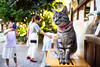 the mascot (Umenomiya shrine, Kyoto) (Marser) Tags: xt10 fuji raw lightroom japan kyoto shrine cat people 京都 梅宮大社 猫 貓