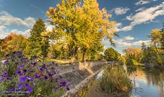 L'étang aux canards / Ducks pond (Pierre Lemieux) Tags: villedequébec québec canada ca parcdesmoulins étang pond eau water fall automne