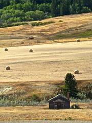 layers (skylinejunkie) Tags: cypresshills farm bales layers prairie saskatchewan canada harvest autumn house shack abandoned hills trees field fall season