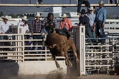 GY8A5261.jpg (BP3811) Tags: 8seconds 2017 allen arizona bareback barrel bell belt bit boots boy breakaway bronc buck buckle bull bulldogger bustin busting calf chase clown corral cow cowboys cowgirl days fall gate hat hazer header healer helmet horns horse jump kids lariat leap mutton october queen racing reins rex riders riding rodeo rope roping run saddle sheep spurs steer team teamwork tie twist wilcox wrestling