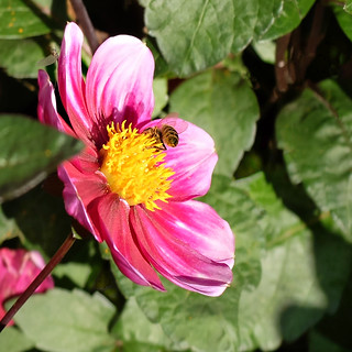 Dahlia and guest -