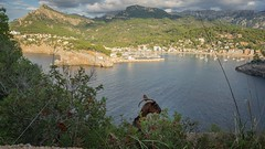 Port de Soller - from the perspective of a goat (rscholle) Tags: portdesoller mallorca goat