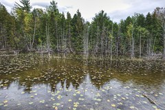 Spring Lake (Herculeus.) Tags: 2017 day deadtrees estuary evergreens fall lake landscape landscapes mi observationspot oct outdoor outdoors outside petosky reflection springlakemi trees water waterflowers usa tree sky forest wood snags 5photosaday
